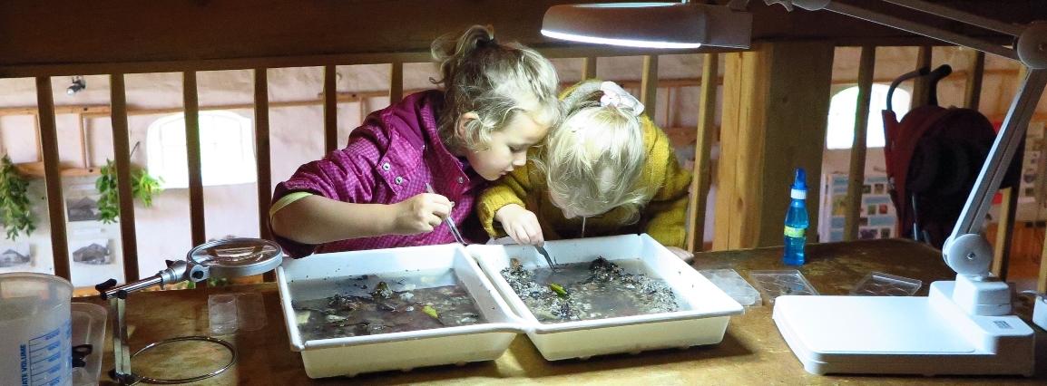 Domáce vzdelávanie na Slovensku
